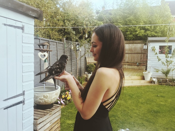 Pip the Pigeon Rescue